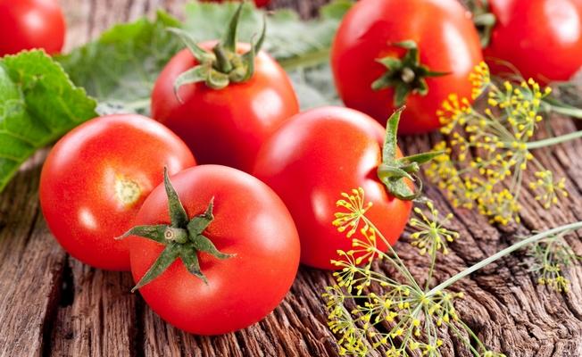 Выбираем сорта помидоров, устойчивых к фитофторозу