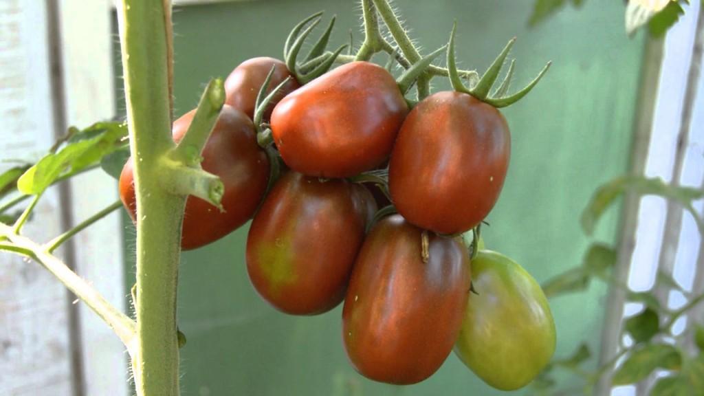 Томат Де-барао черный - сорт томатов