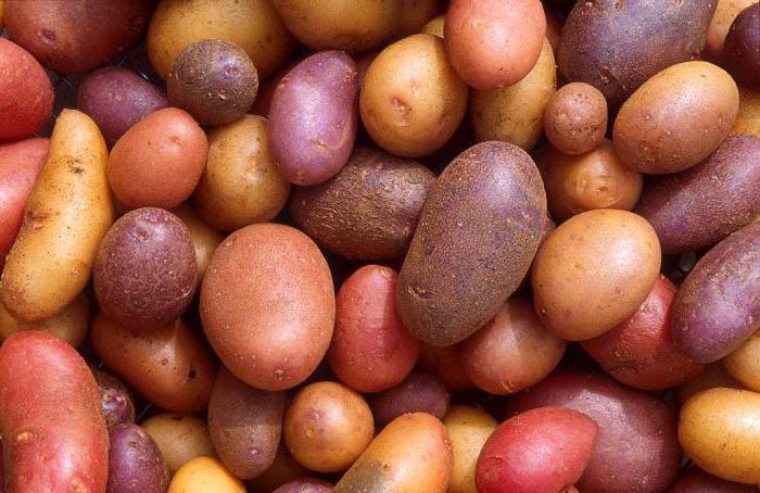 урожайность картофеля с 1 га в россии