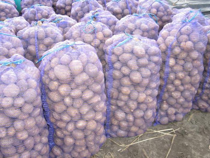 картофель гала урожайность с 1 га