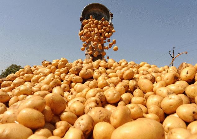 урожайность картофеля с 1 га в среднем