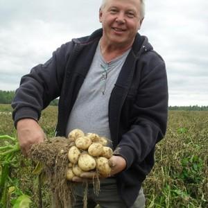 Урожайность картофеля с 1 га в украине