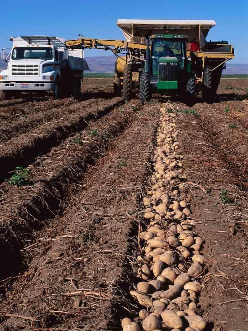 Средняя урожайность картофеля с 1 га