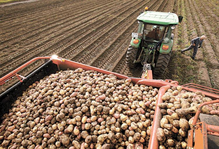 Уборка картофеля техникой