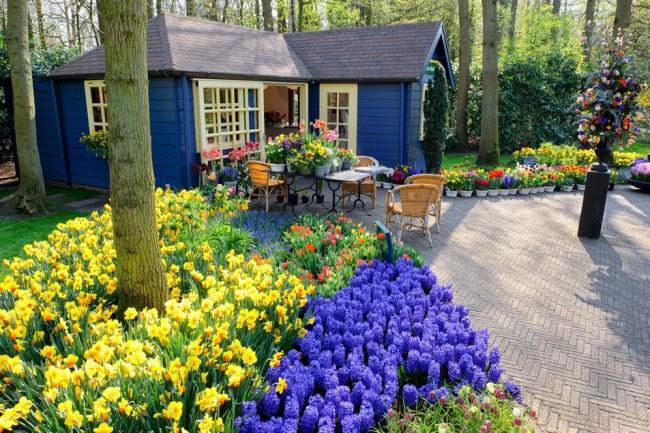 Первые свежие и яркие весенние цветы
