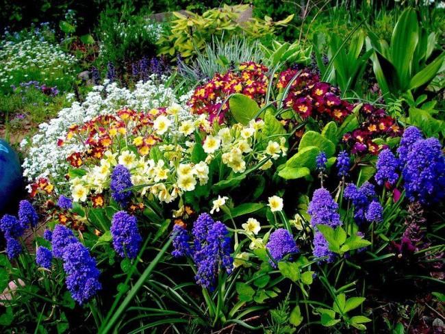 Посадите у себя первоцветы и они будут радовать вас своими красками после холодной зимы