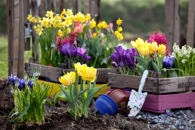 Многие из первоцветов можно высаживать как в грунт на участке, так и в горшки, которыми тоже можно украсить ваш сад