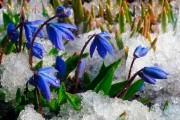 Фото 2 Весенние первоцветы (фото с названиями): разбудите ваш дачный участок!