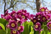 Фото 3 Весенние первоцветы (фото с названиями): разбудите ваш дачный участок!