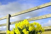 Фото 6 Весенние первоцветы (фото с названиями): разбудите ваш дачный участок!