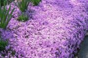 Фото 9 Весенние первоцветы (фото с названиями): разбудите ваш дачный участок!