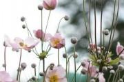 Фото 10 Весенние первоцветы (фото с названиями): разбудите ваш дачный участок!