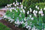Фото 13 Весенние первоцветы (фото с названиями): разбудите ваш дачный участок!