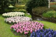 Фото 14 Весенние первоцветы (фото с названиями): разбудите ваш дачный участок!