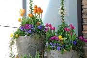 Фото 15 Весенние первоцветы (фото с названиями): разбудите ваш дачный участок!