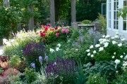 Фото 17 Весенние первоцветы (фото с названиями): разбудите ваш дачный участок!