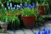 Фото 18 Весенние первоцветы (фото с названиями): разбудите ваш дачный участок!
