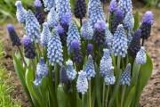 Фото 21 Весенние первоцветы (фото с названиями): разбудите ваш дачный участок!