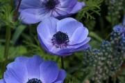 Фото 22 Весенние первоцветы (фото с названиями): разбудите ваш дачный участок!