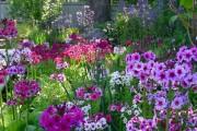 Фото 23 Весенние первоцветы (фото с названиями): разбудите ваш дачный участок!