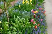 Фото 25 Весенние первоцветы (фото с названиями): разбудите ваш дачный участок!