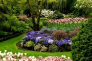 Фото 27 Весенние первоцветы (фото с названиями): разбудите ваш дачный участок!