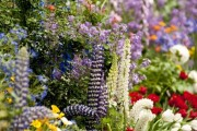 Фото 29 Весенние первоцветы (фото с названиями): разбудите ваш дачный участок!