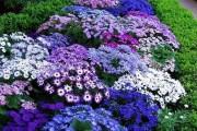 Фото 31 Весенние первоцветы (фото с названиями): разбудите ваш дачный участок!