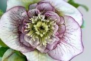 Фото 32 Весенние первоцветы (фото с названиями): разбудите ваш дачный участок!