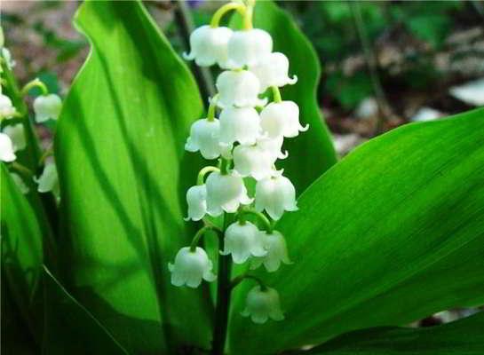 ранние весенние цветы фото