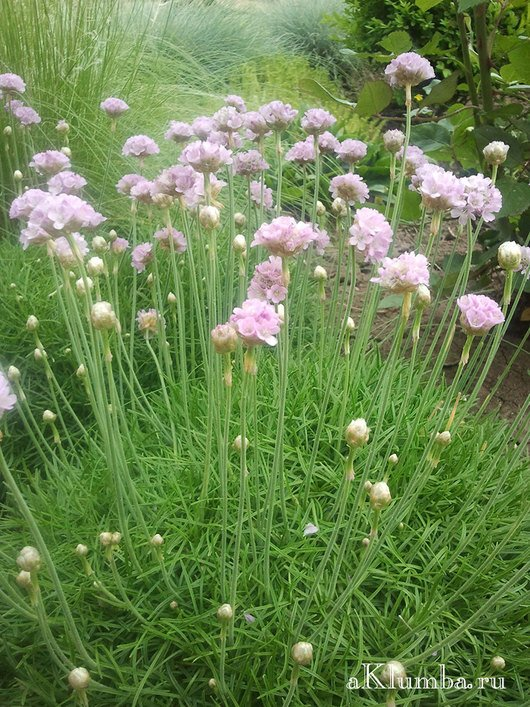Весенние цветы с фото и названиями