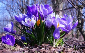 Весенние цветы: названия