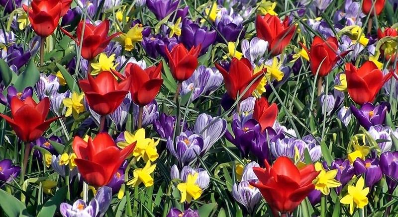 Самые ранние цветы весной