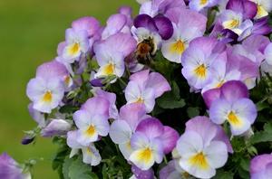 Ранние цветы весной