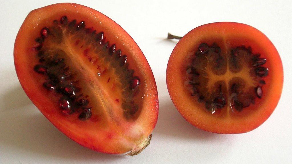 Плоды экзотического томатного дерева дали название сорту помидор Цифомандра