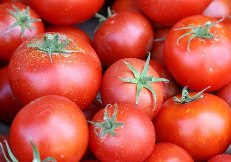 Позднеспелые томаты, предназначенные для Краснодарского края, характеризуются своими удивительными вкусовыми качествами, хорошим урожаем и продолжительностью плодоношения