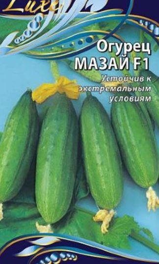 Огурцы длительного плодоношения для теплиц Мазай