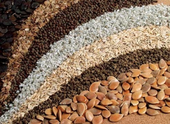Как протравливать семена в марганцовке