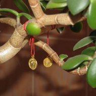 Чем подкормить денежное дерево в домашних условиях?