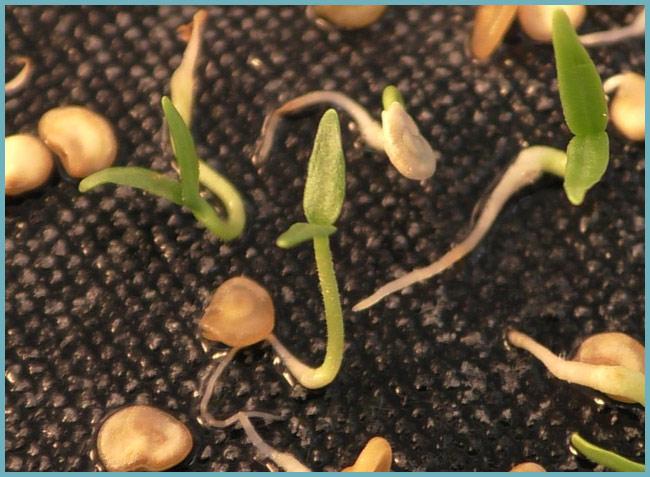 Подготовка семян - важный процесс, требующий внимания и ответственности