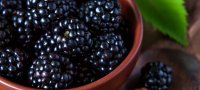 Черная малина Кумберленд: описание сорта, посадка и уход