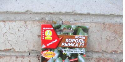 Домашнее задание №13: о тыквенных растениях