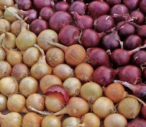 Сорта луковых культур фото