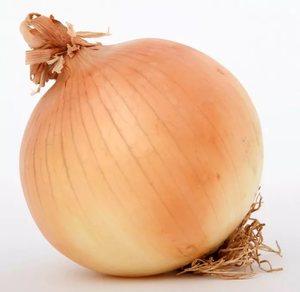 Большие луковицы лука размером более 2 см фото