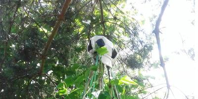 Вигвам для огурцов - быстро, легко, надёжно, урожайно и оригинально