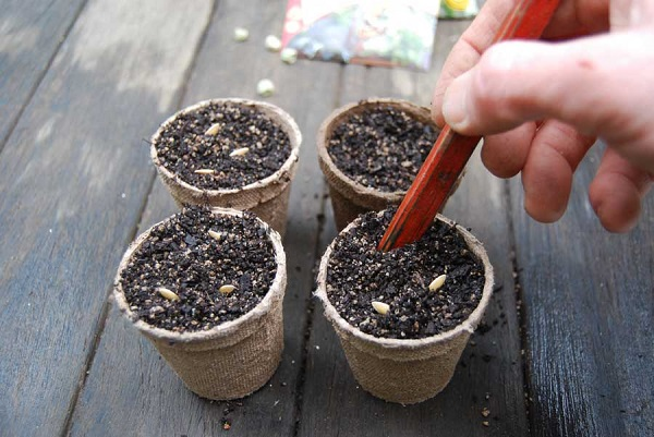 Семена в горшочках
