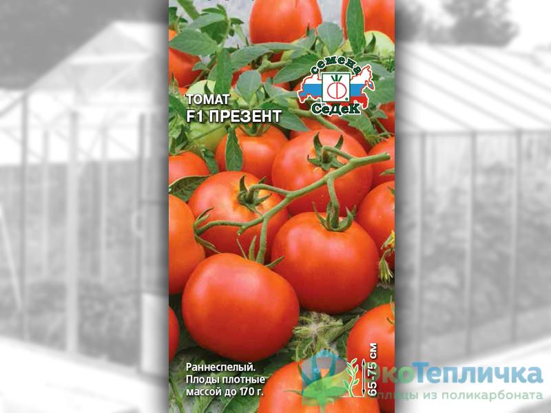 сорт помидоров презент