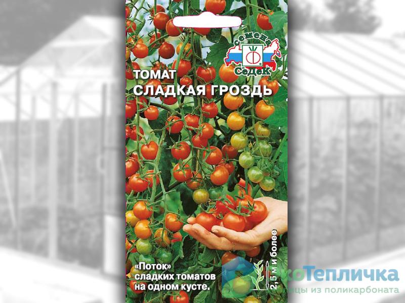сорт помидоров сладкая гроздь