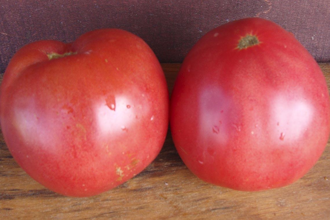 Коллекционные сорта томатов мировой селекции Нежность