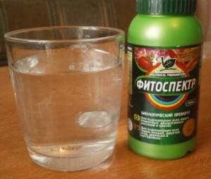 Фитоспектр – растворить 10 капель в стакане воды и подержать семена 30 минут